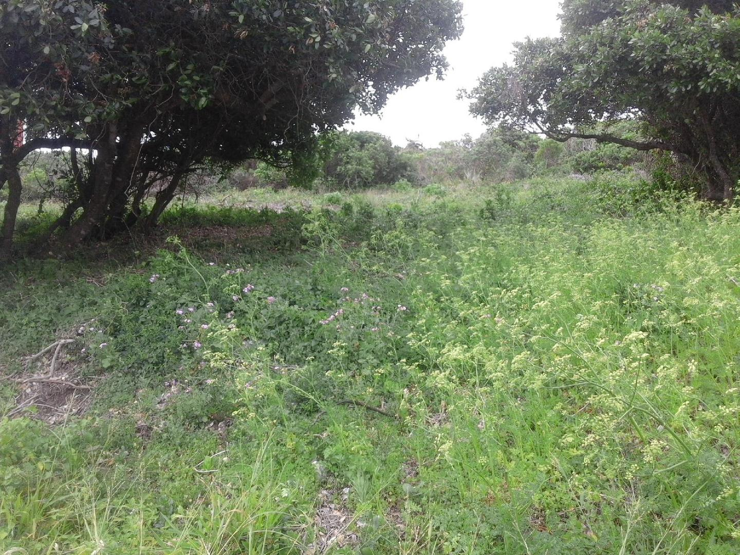 Vacant Land Residential For Sale In Seaview