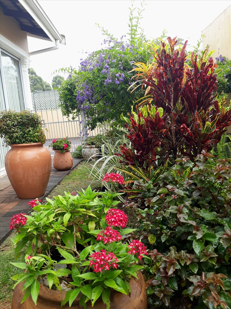 Beautiful established garden