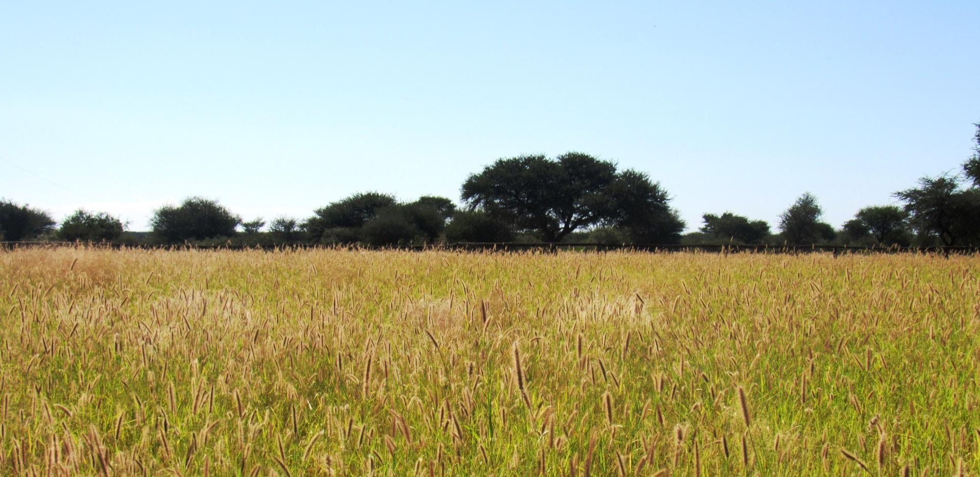 Bloubuffe cultivated pastures