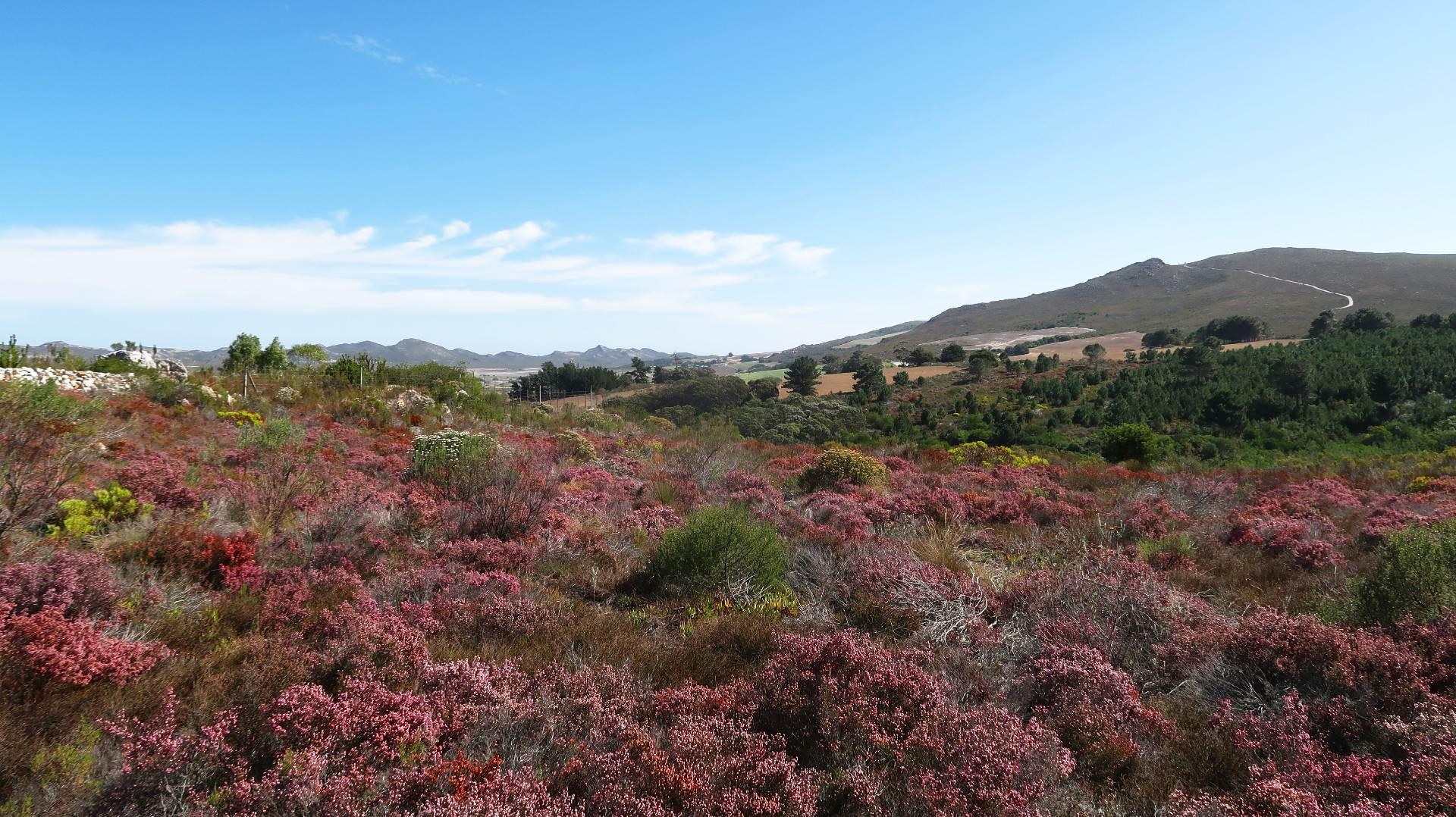 Facing West into the Baardskeerdersbos Valley