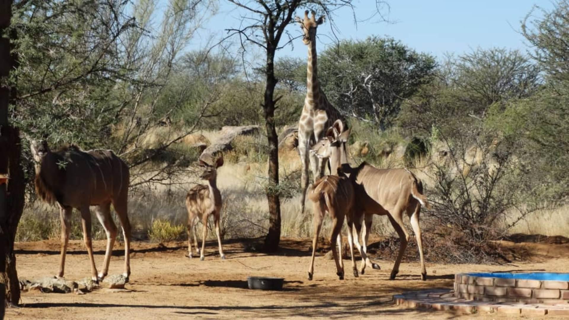 Small Holding For Sale In Omaruru Omaruru Namibia For