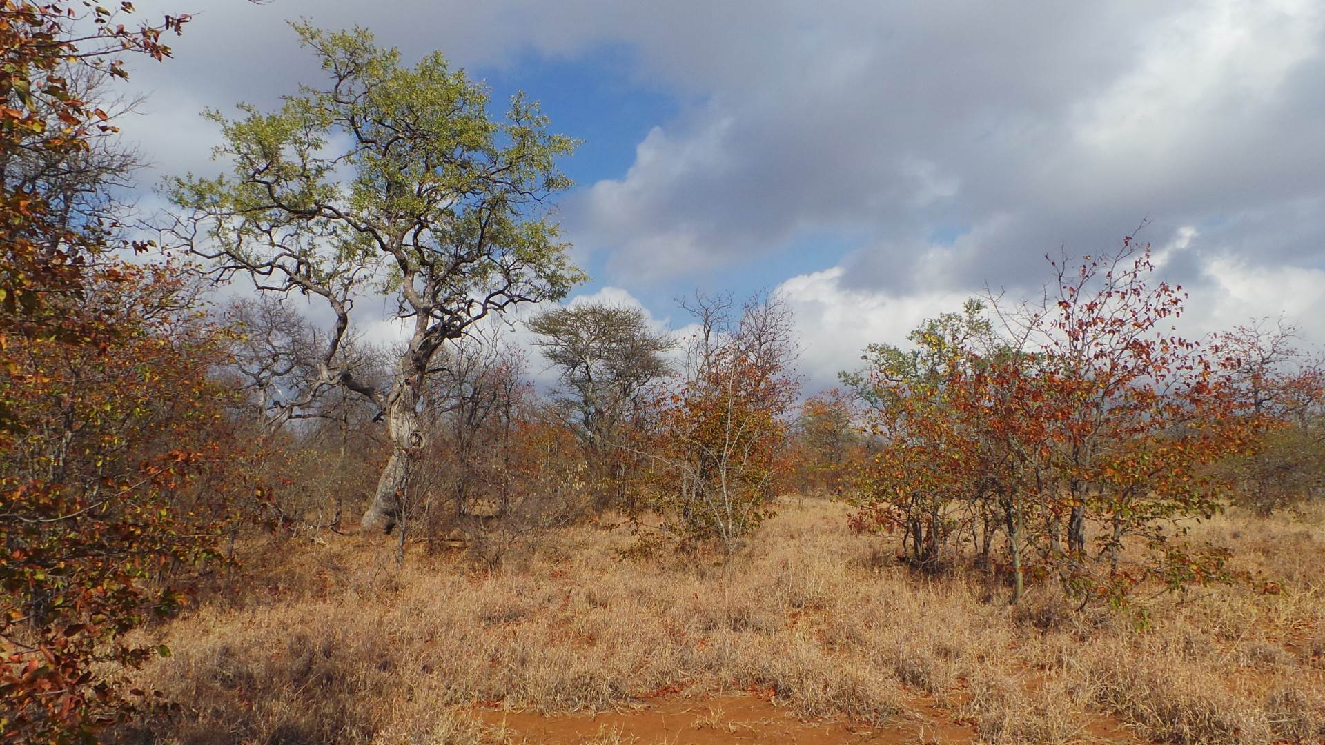 Vacant Land Agricultural For Sale In Gravelotte