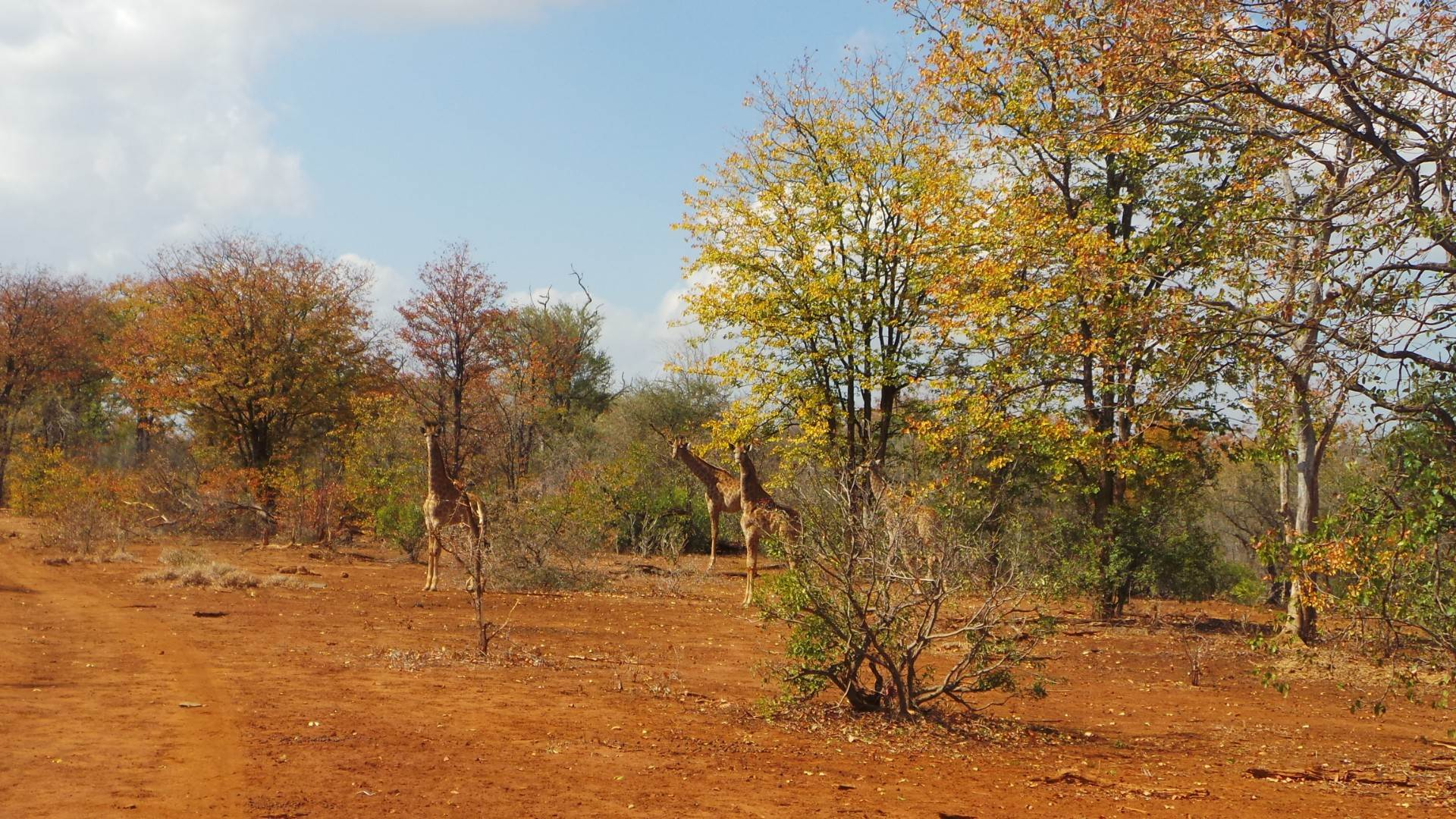 Vacant Land Commercial For Sale In Gravelotte
