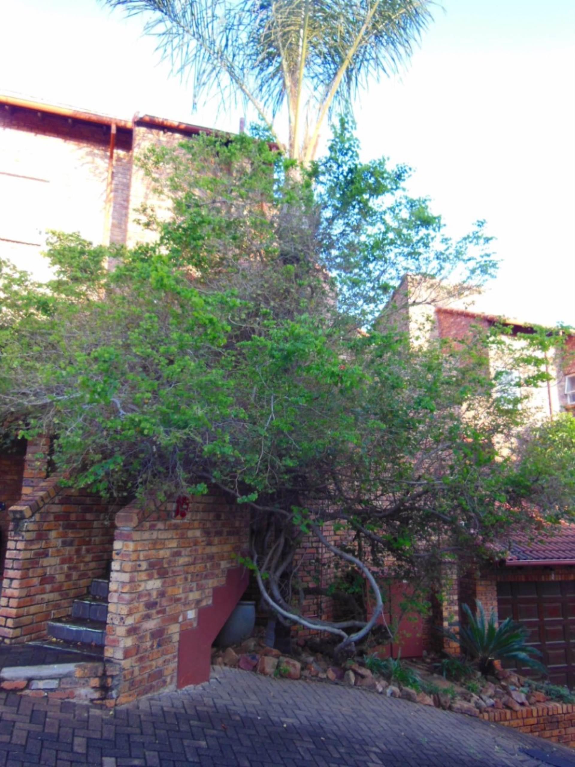 Brummeria property for sale. Ref No: 13545418. Picture no 16