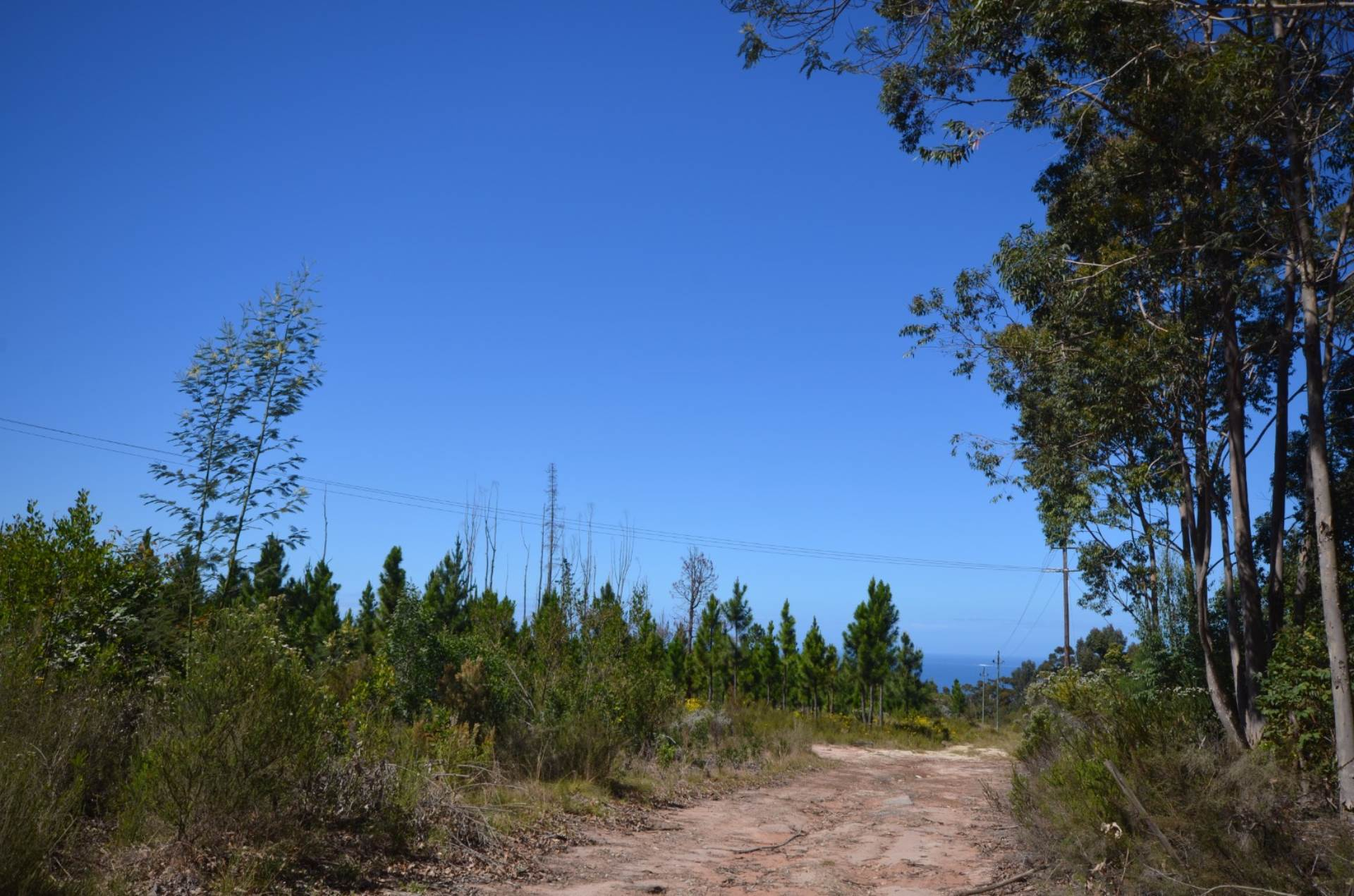 Vacant Land Residential For Sale In Keurbooms