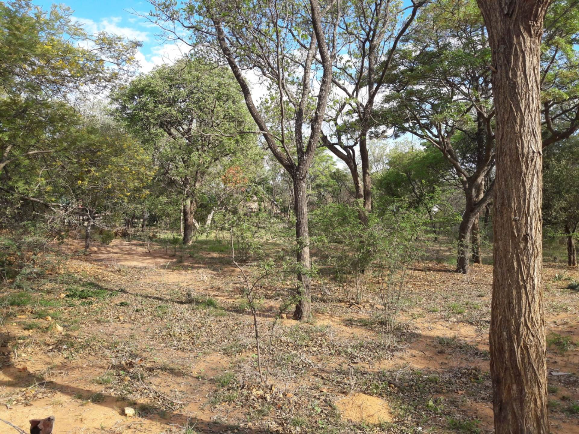 Vacant Land Residential For Sale In Vaalwater