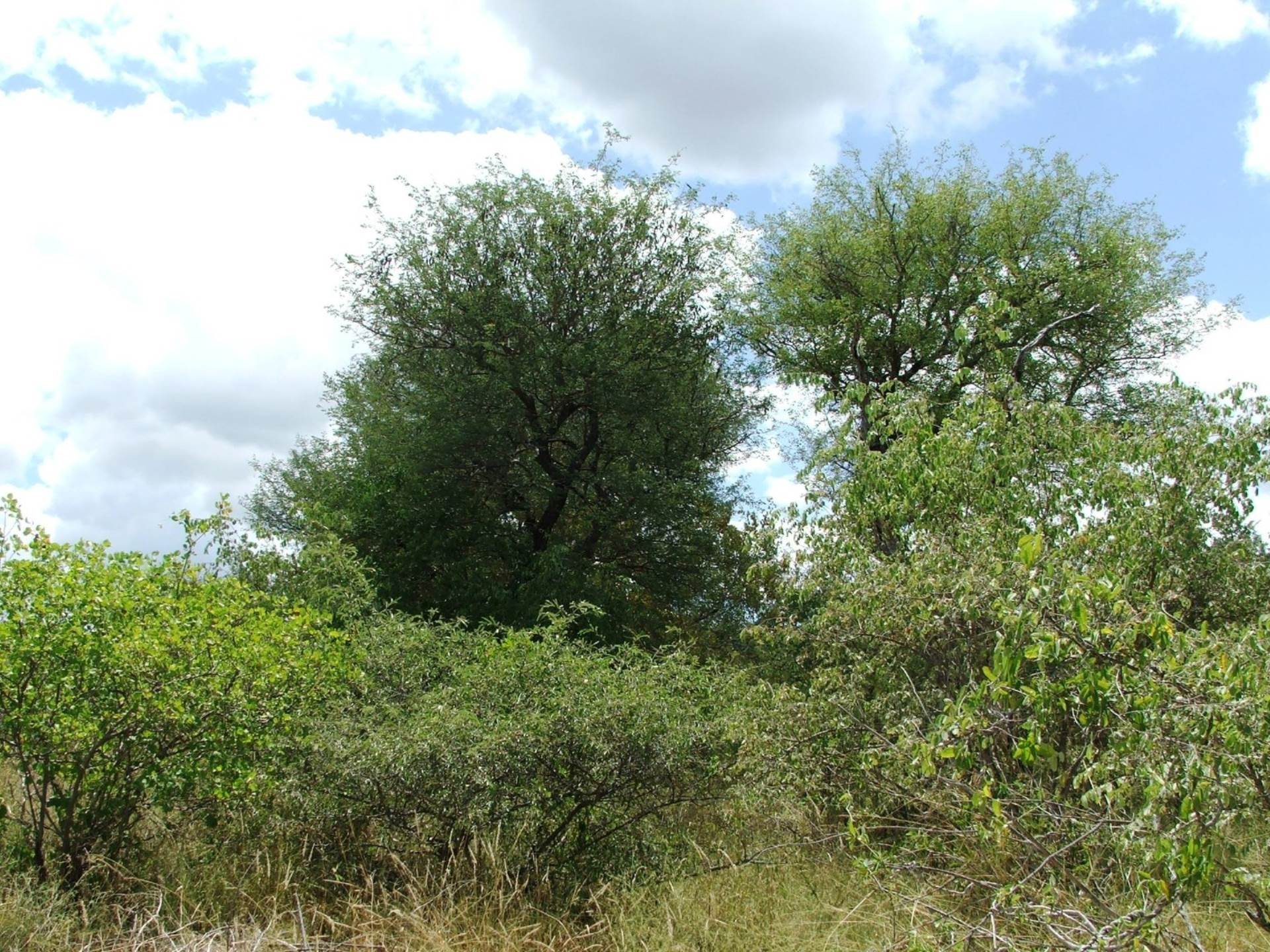 Vacant Land Residential For Sale In Hoedspruit