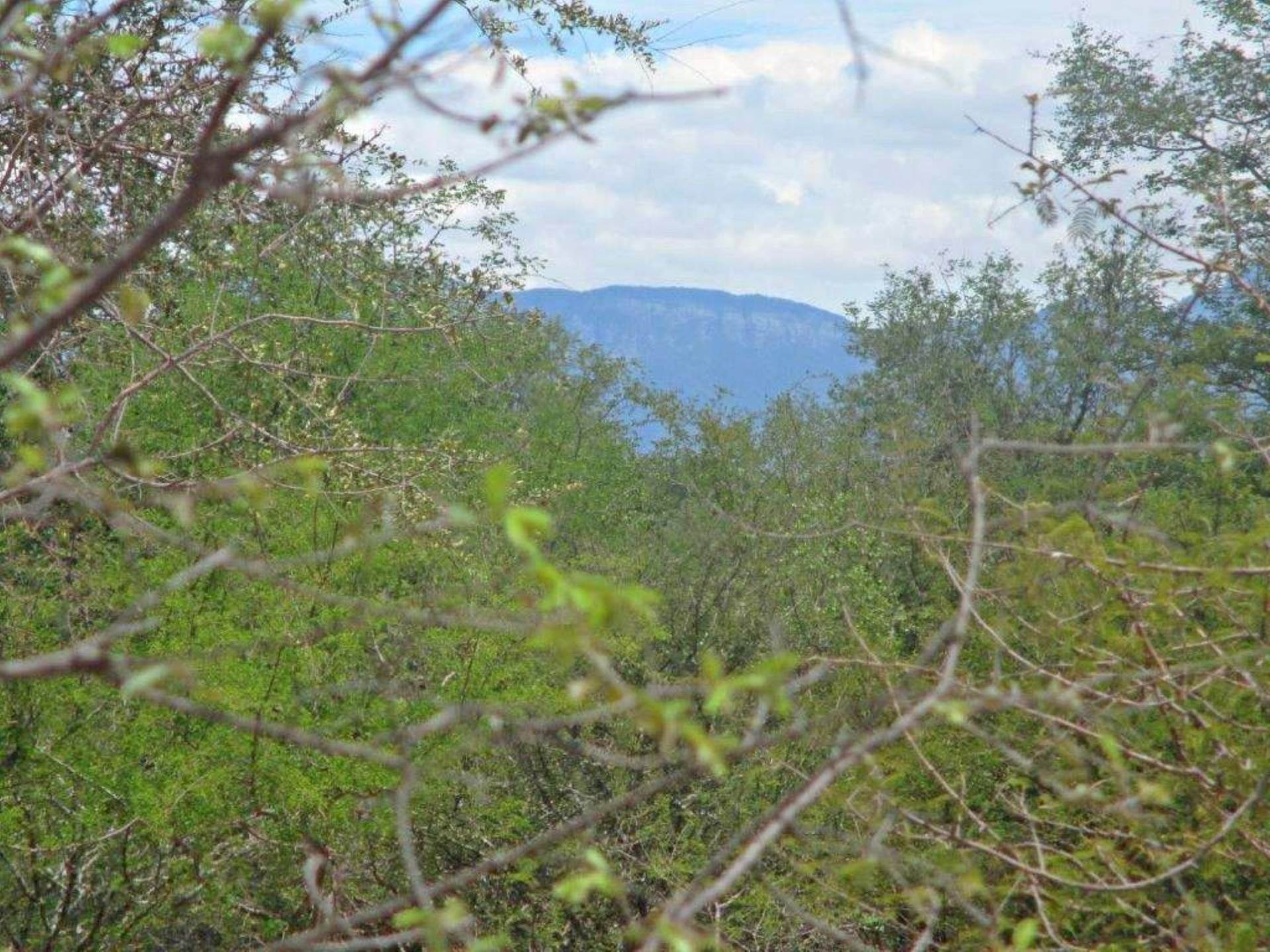 Vacant Land Residential For Sale In Hoedspruit Wildlife Estate