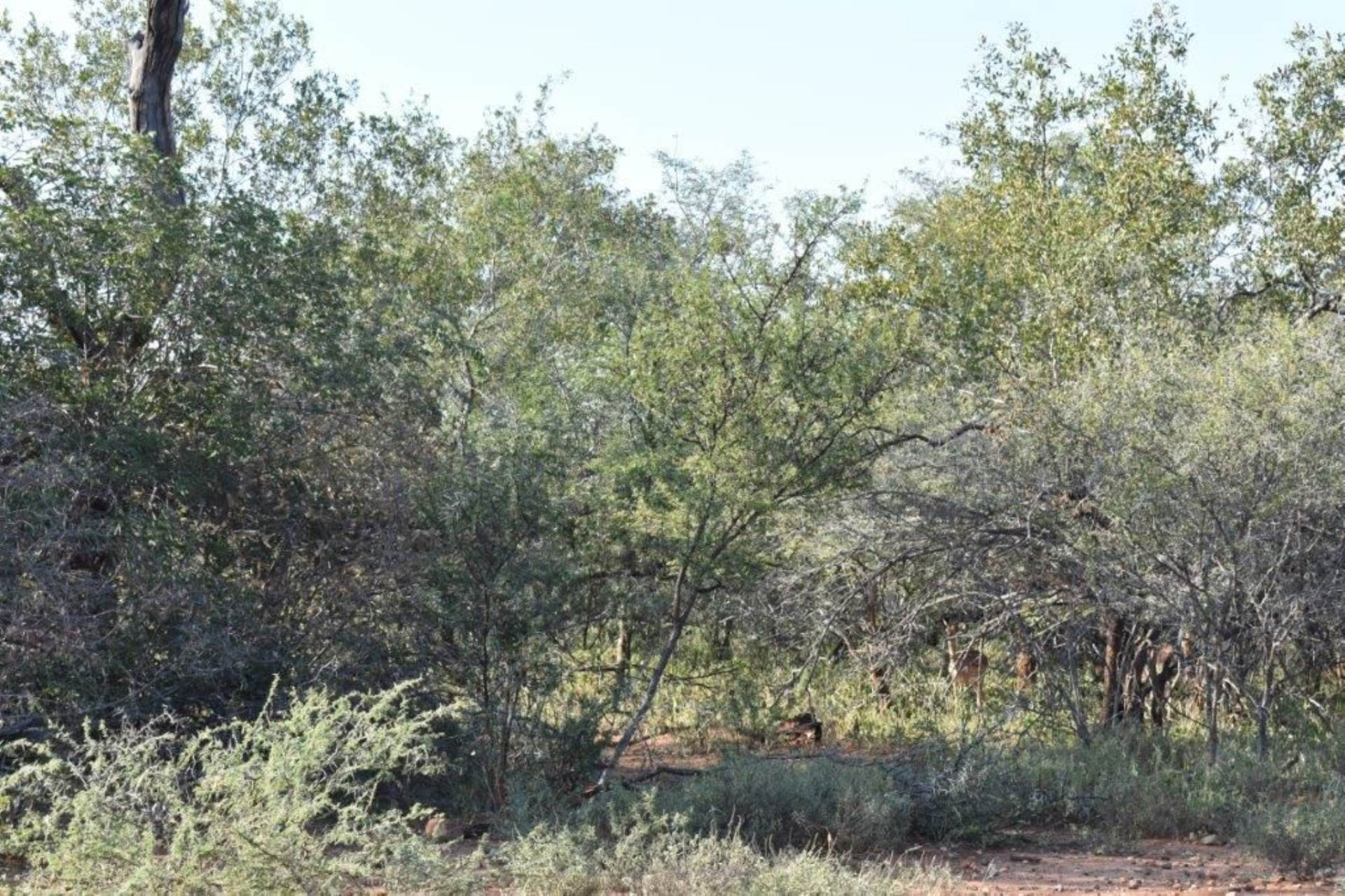 Vacant Land Residential For Sale In Hoedspruit Wildlife Estate