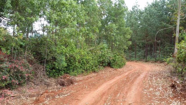 Vacant Land Agricultural For Sale In Magoebaskloof