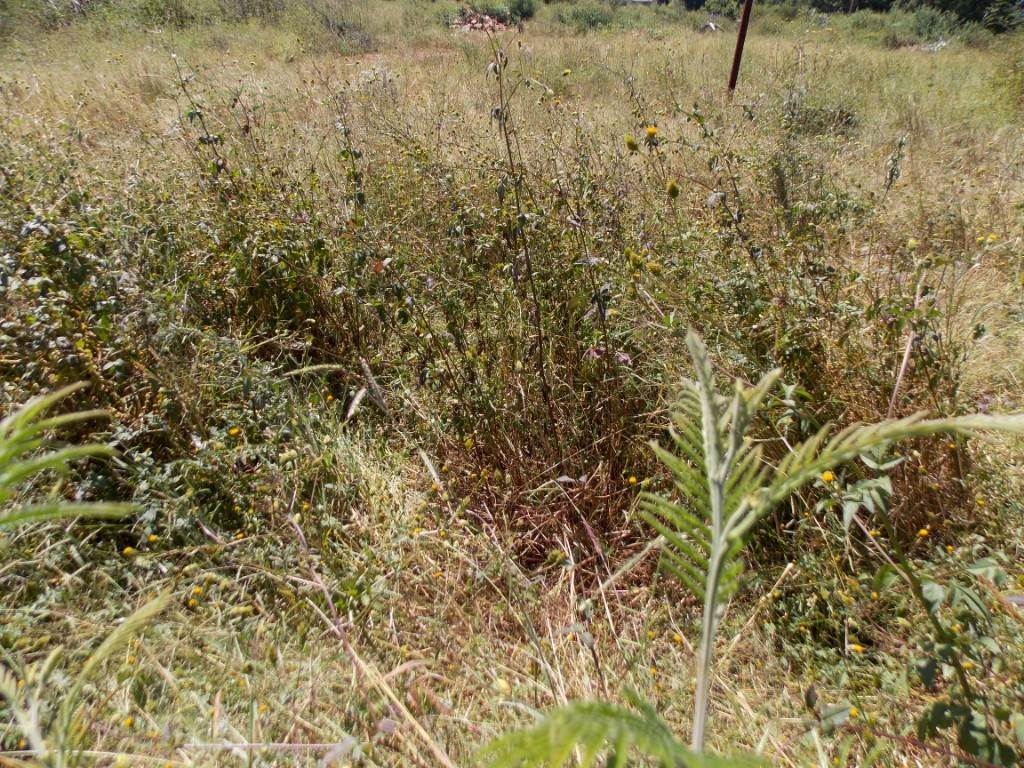 Grootfontein Country Estate property for sale. Ref No: 13534594. Picture no 2