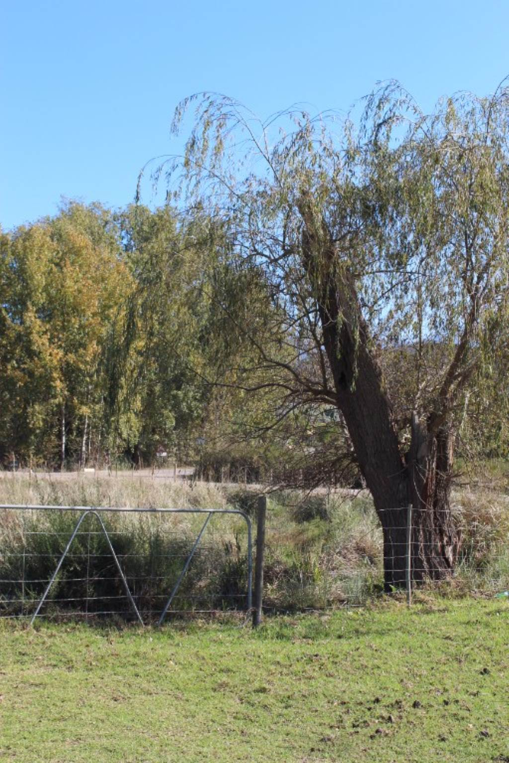 Vacant Land Agricultural For Sale In Greyton