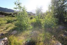 Vacant Land Residential for sale in Pringle Bay 1006094 : photo#8