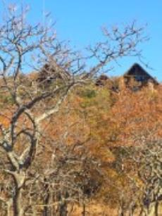 Game Farm Lodge for sale in Vaalwater 1009226 : photo#3