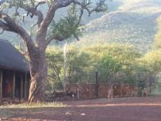 Farm for sale in Thabazimbi 1010288 : photo#7