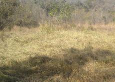 Vacant Land Residential for sale in Hazyview 1012521 : photo#6