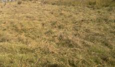 Vacant Land Residential for sale in Hazyview 1012521 : photo#4