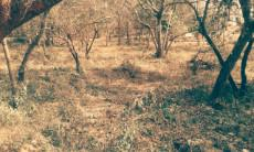 Vacant Land Residential for sale in Hazyview 1012521 : photo#1