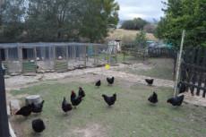 3 Bedroom Farm for sale in Rheenendal 1027094 : photo#14