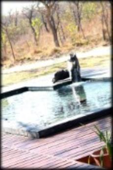 Farm for sale in Vaalwater 1038284 : photo#9