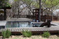 Farm for sale in Vaalwater 1038284 : photo#15