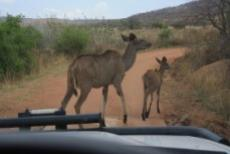 Game Farm Lodge for sale in Vaalwater 1038326 : photo#20