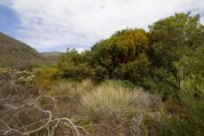 Vacant Land Residential for sale in Pringle Bay 1040296 : photo#3