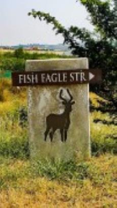 Fish Eagle street