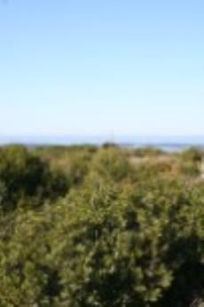 Vacant Land Residential for sale in Bettys Bay 1125670 : photo#1