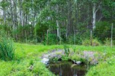 One of the springs which are used for irrigation