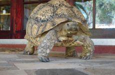Toni the turtle