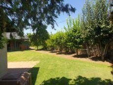 Lots of citrus trees