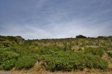 Vacant Land Residential for sale in Pringle Bay 721979 : photo#30