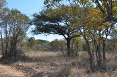4 Bedroom Farm for sale in Vaalwater 767302 : photo#41