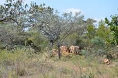 3 Bedroom Farm for sale in Vaalwater 768606 : photo#12