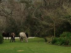 Horses garden