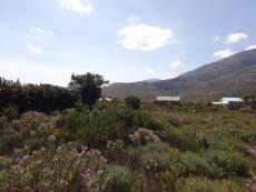 array of fynbos