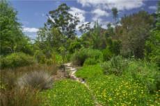 Indigenous garden between homestead and river
