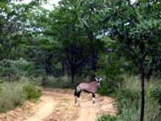 Game Farm Lodge for sale in Vaalwater 950290 : photo#12