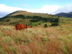 3 Bedroom Farm for sale in Nylstroom 965188 : photo#0