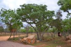 Small Holding for sale in Waterberg 980382 : photo#67