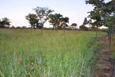 Small Holding for sale in Waterberg 980382 : photo#38