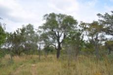 Small Holding for sale in Waterberg 980382 : photo#39