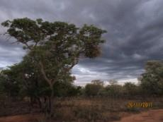 Small Holding for sale in Waterberg 980382 : photo#91