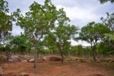 Small Holding for sale in Waterberg 980382 : photo#68