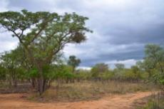 Small Holding for sale in Waterberg 980382 : photo#66
