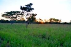 Small Holding for sale in Waterberg 980382 : photo#8