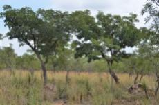 Small Holding for sale in Waterberg 980382 : photo#41