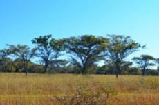 Farm for sale in Vaalwater 994785 : photo#34