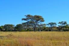 Farm for sale in Vaalwater 994785 : photo#25